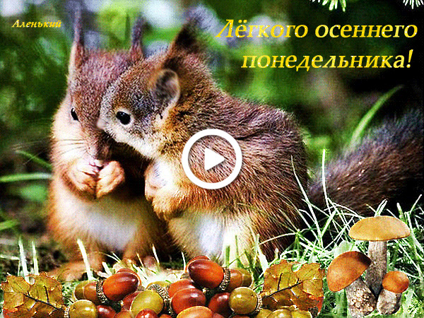Postcard free squirrels, good monday morning, autumn greeting pictures