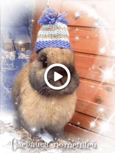 Postcard free animation, bunny, winter