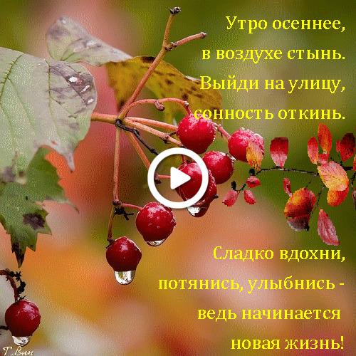 Postcard free autumn morning, berries, red berries