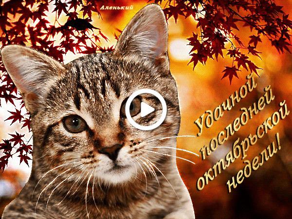 Postcard free kitten, cats, text