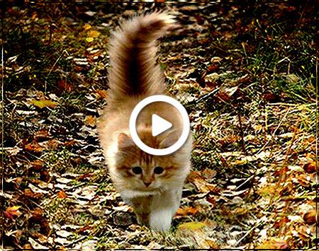 Postcard free autumn, hello, kitten