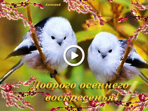 Postcard free birds, good autumn sunday, good sunday morning