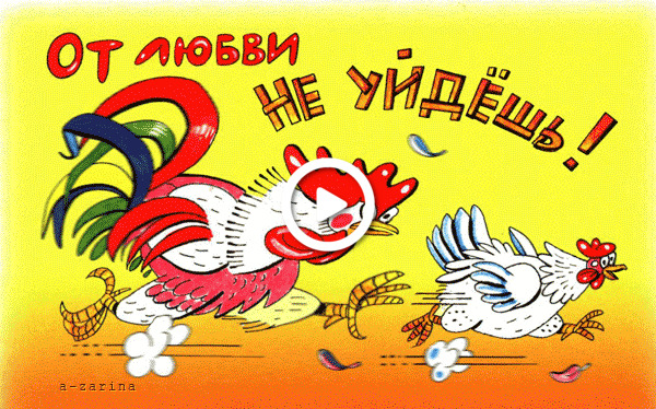 Postcard free chicken, rooster, humor