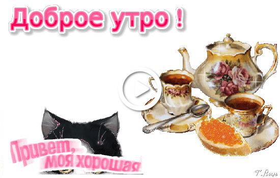 Postcard free morning hello, cat, tea
